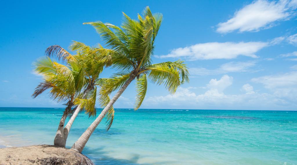 Palmeiras em uma praia em Samana, República Dominicana. Destinos caribe