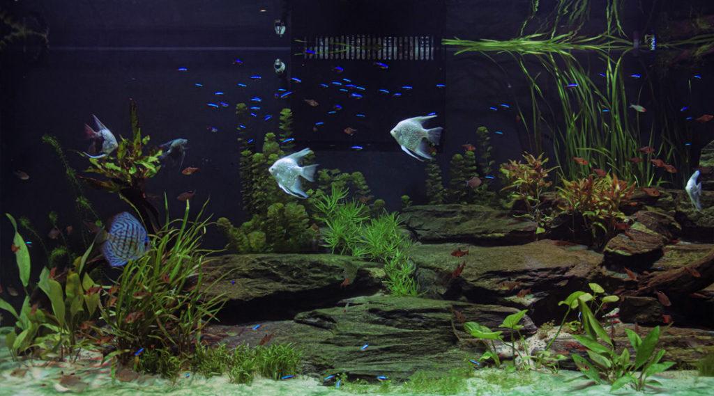 imagem de aquario