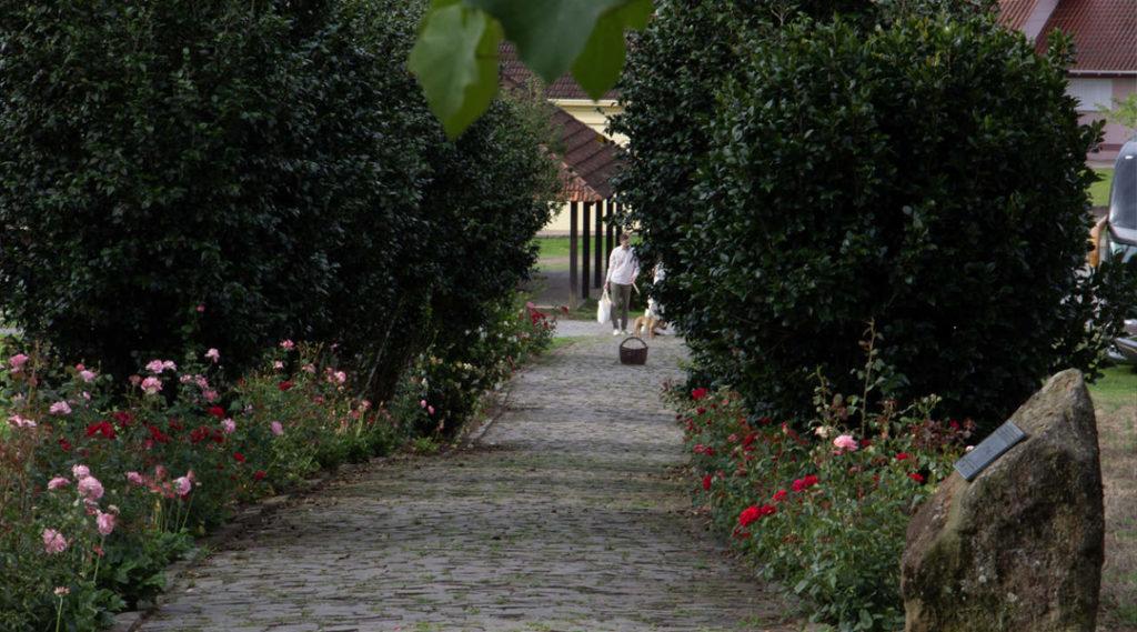 imagem de um corredor florido